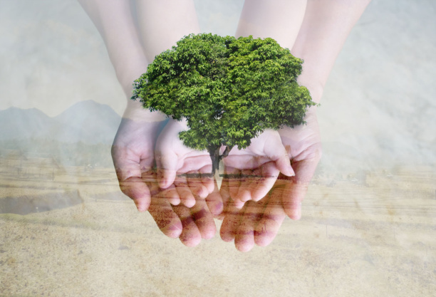 Environmental standards in the book industry: where are we standing?