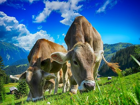 Aurora Organic Dairy Remains Faithful To Its 'Cow-To-Carton' Model Even After Bagging Some Early Achievements