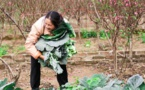 Wholesum Harvest Receives Another Fair Trade Certificate For Arizonian Farm