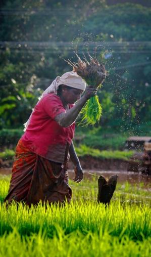 eKutir's Blooom e-Platform Supports Smallholder Farmers