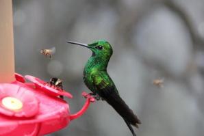 Mexico Builds Urban Gardens To Prevent Hummingbirds Extinction