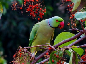 Facilitating The Return Of Native Birds Into The Indonesian Forests