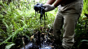 Chevron In Ecuador – The Appeal