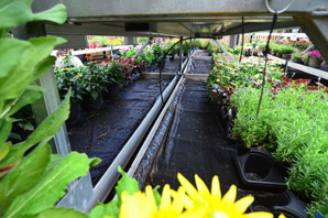 WaterPulse Irrigation Mat Replaces Walmart Associates