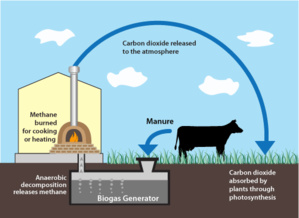 Dairy Digesters Will Be Wise Investment For California, Reveal New Study