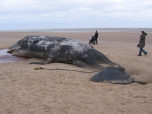 Costa Cruises Signs The Sperm Whale Conservation Protocol