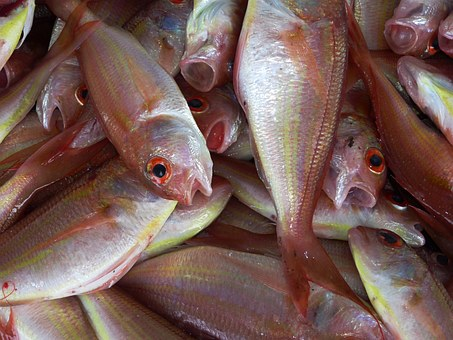 Scientists Find Out New Ways To Identify Sustainable Sources Of Fishing