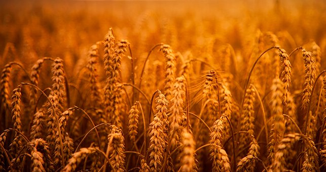 Sustainable Farming Is A Door Way To 'Low Carbon Economy'