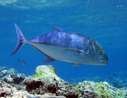 Marina Bay Sands & WWF Partner To Promote Ocean & Seafood Conservation