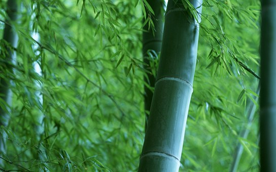 Promoting Bamboo Trees For Soil Restoration In Kenya