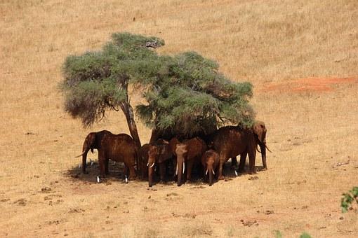 Kenya's Lesson On Land Restoration 2030 Commitment