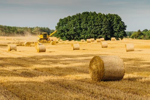 Replacing 'Certified Fresh Wood Fiber With Renewable Wheat Straw'