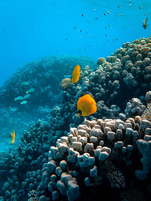 The Ocean League: Exploring Imagery & Storytelling For Ocean Conservation