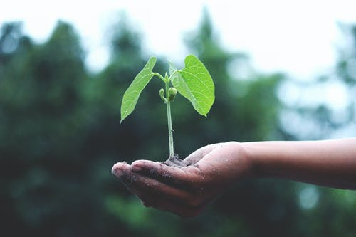 A Day Dedicated To Planting Of Trees