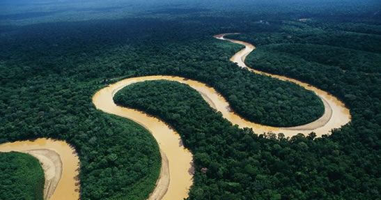 Kulera's sale of Carbon Credits save forests in Africa