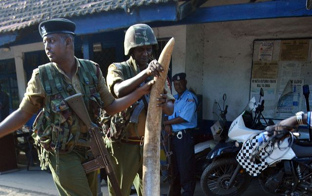 The proliferation of the illegal sale of small arms is triggering the butchery of wildlife in Africa
