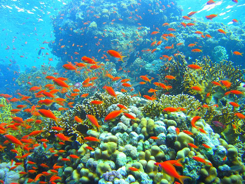 Grenada takes pro-active steps and rebuilds coral reefs