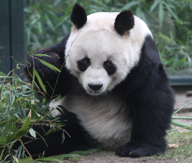 Seagate Conducts A Restoration, Conservation and Monitoring Project At China's National Park To Protect The 'Giant Panda Habitat'
