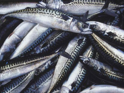 Restaurants Are Urged To Serve 'Sustainable Seafood'