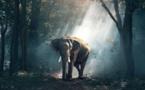 A Journey That Creates Aware Environmental Stewards
