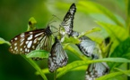 'Simple Projects Play A Vital Role In Biodiversity Conservation'