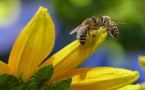 """Bee Responsible"" Promotes 'Pollinator-Friendly' Gardening"