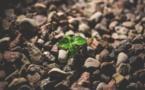 Reclaiming The Greenery In Horqin Desert