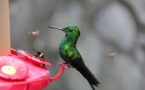 Mexico Builds Urban Gardens To Prevent Hummingbirds Extinction