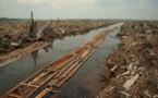 Asia Pulp and Paper Starts A New Initiative To Tackle With Deforestation