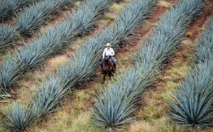 Sustainable Approach To Tequila Production