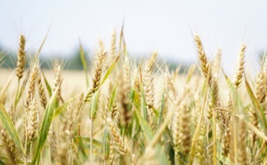 AB InBev Invests In Agro-Tech
