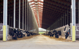 Under industry sway, EU to reintroduce processed animal proteins