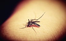 Addressing 'The Ongoing Need For Insect Repellent' In The Brazilian Community