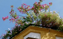 Rooftop Garden Is A Recent Addition To LACC's Environment Friendly Features